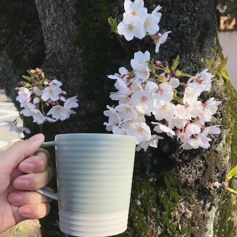 桜とcekitayで乾杯